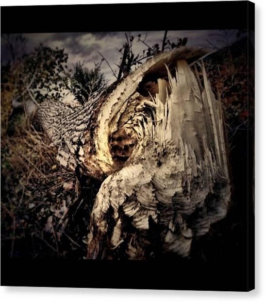 Beavers Canvas Print - Elementary My Dear Watson. It Was A by Ron Meiners
