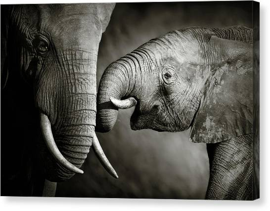 Elephants Canvas Print - Elephant Affection by Johan Swanepoel