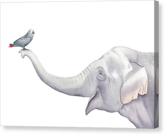 Elephants Canvas Print - Elephant And Bird Watercolor by Zapista