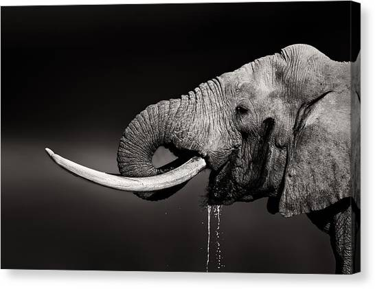 Large Mammals Canvas Print - Elephant Bull Drinking Water - Duetone by Johan Swanepoel