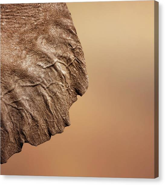 Ears Canvas Print - Elephant Ear Close-up by Johan Swanepoel