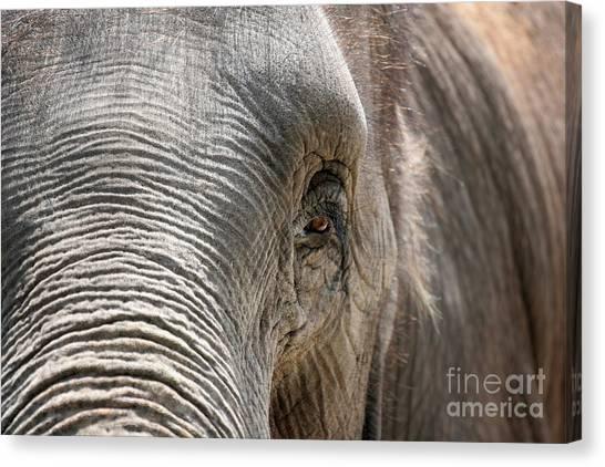 Asian Canvas Print - Elephant Eye by Jeannie Burleson