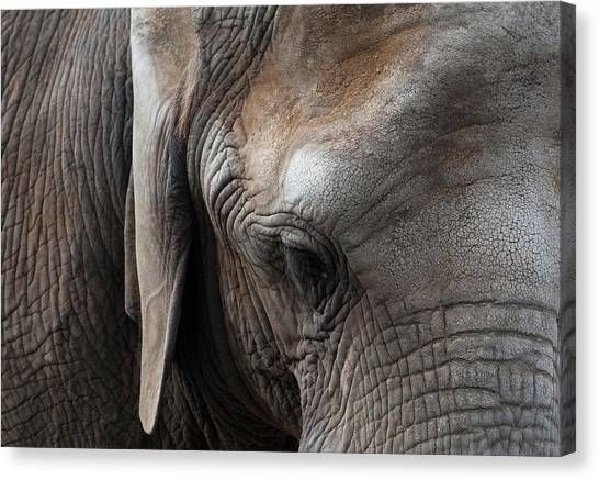 Canvas Print featuring the photograph Elephant Eye by Lorraine Devon Wilke