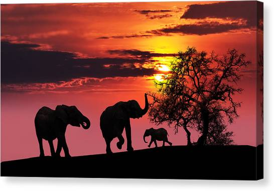 Large Mammals Canvas Print - Elephant Family At Sunset by Jaroslaw Grudzinski