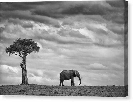 Kenyan Canvas Print - Elephant Landscape by Mario Moreno
