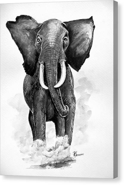Elephant Canvas Print by Paul Sandilands