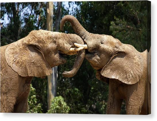 Elephant Play Canvas Print