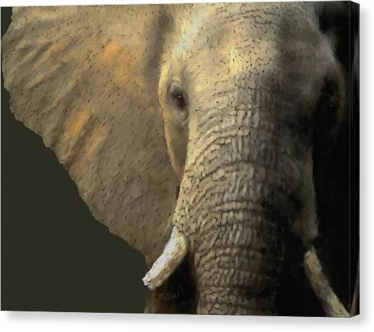 Elephant Portrait Canvas Print