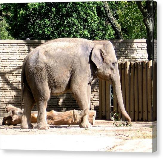 Canvas Print featuring the photograph Elephant by Rose Santuci-Sofranko