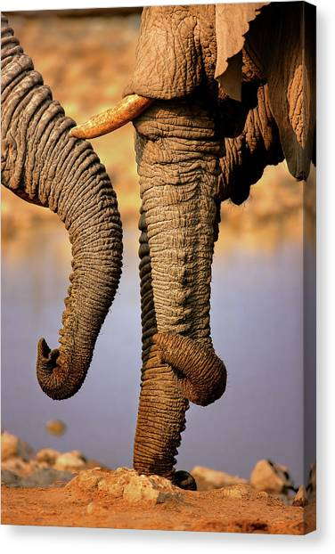 Large Mammals Canvas Print - Elephant Trunks Interacting Close-up by Johan Swanepoel
