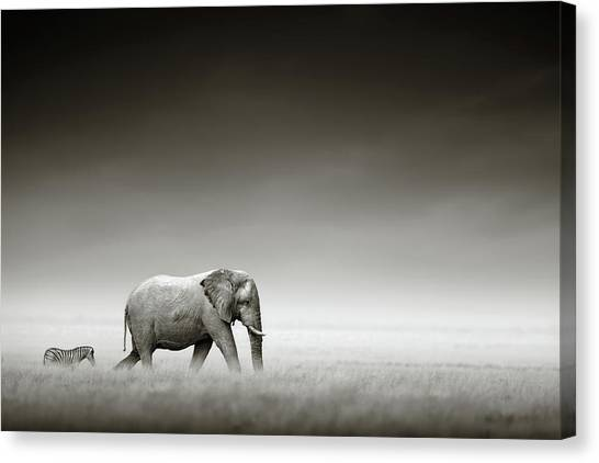 Two Canvas Print - Elephant With Zebra by Johan Swanepoel