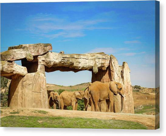Canvas Print featuring the photograph Elephants by Alison Frank