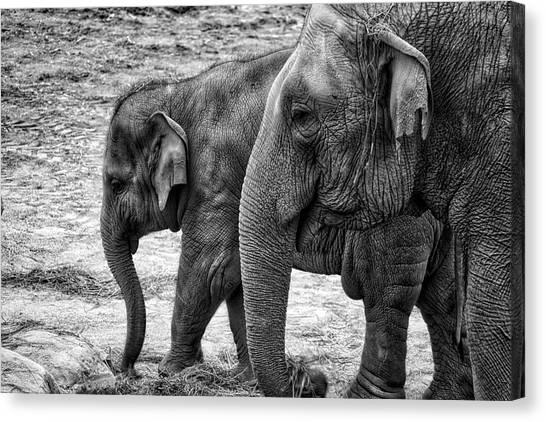 Elephants Bw Canvas Print
