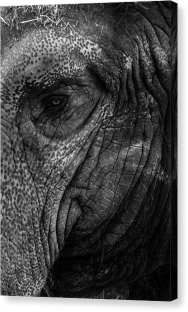 Elephants Eye Canvas Print