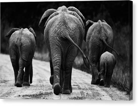 African Canvas Print - Elephants In Black And White by Johan Elzenga