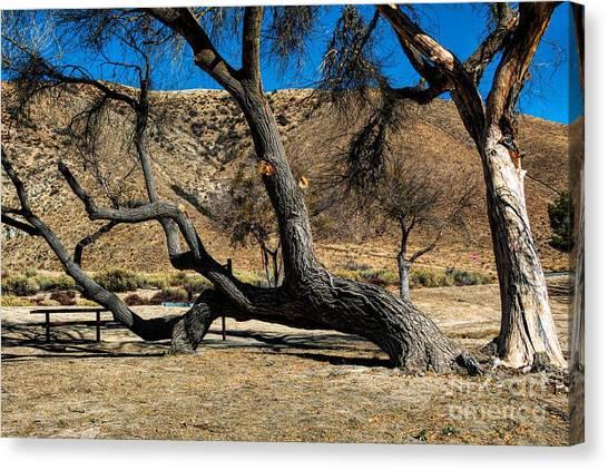 Elizabeth Lake Tree Canvas Print