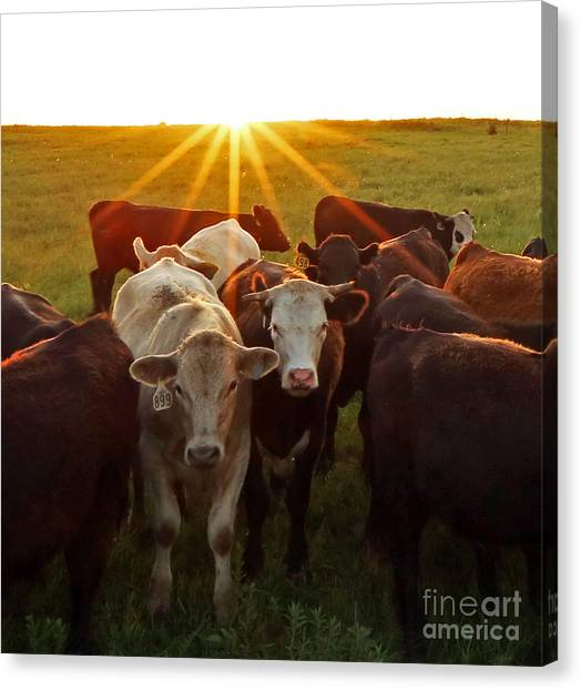 Elk County Herd Canvas Print