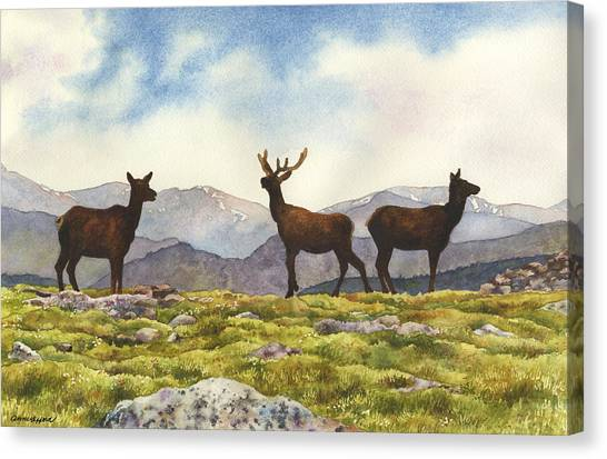 Elk Canvas Print - Elk In The Evening by Anne Gifford