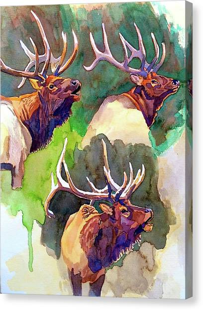Elk Studies Canvas Print