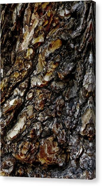 Elm Tree Bark Pattern Canvas Print by Frank Tschakert