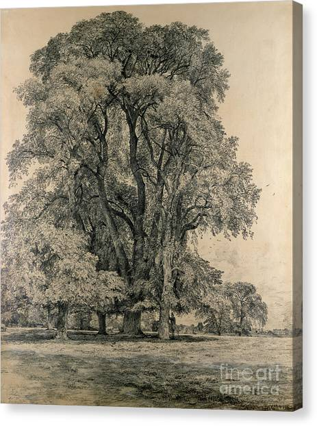 Tree Canvas Print - Elm Trees In Old Hall Park by John Constable