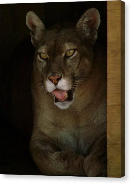 Elmira's Panther Canvas Print by Kimberly Camacho
