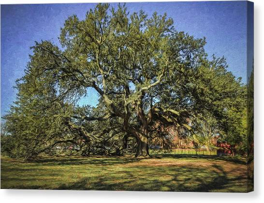 Emancipation Oak Tree Canvas Print