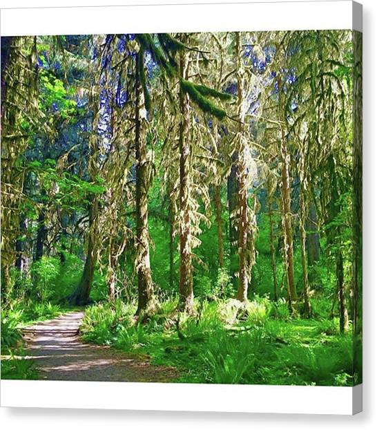 Rainforests Canvas Print - Emerald Forest #naturephotography by The World Through My Eyes
