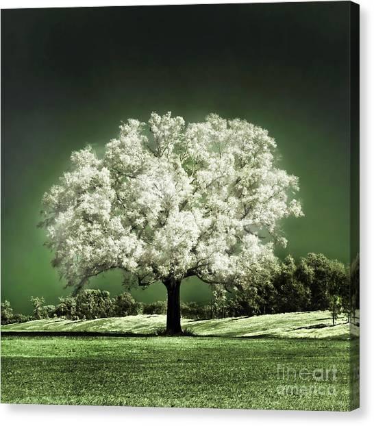 Oak Trees Canvas Print - Emerald Meadow Square by Hugo Cruz