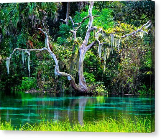 Rainbow Springs Florida Canvas Prints (Page #2 of 5) | Fine Art America