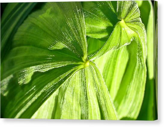 Canvas Print - Emerging Plants by Douglas Barnett