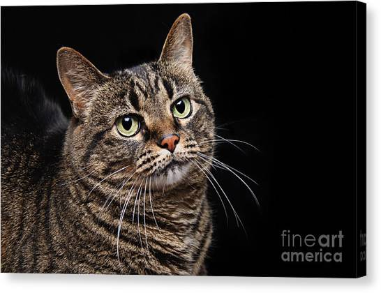 Emmy The Cat Ponder Canvas Print