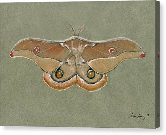 Hawks Canvas Print - Emperor Gum Moth by Juan Bosco