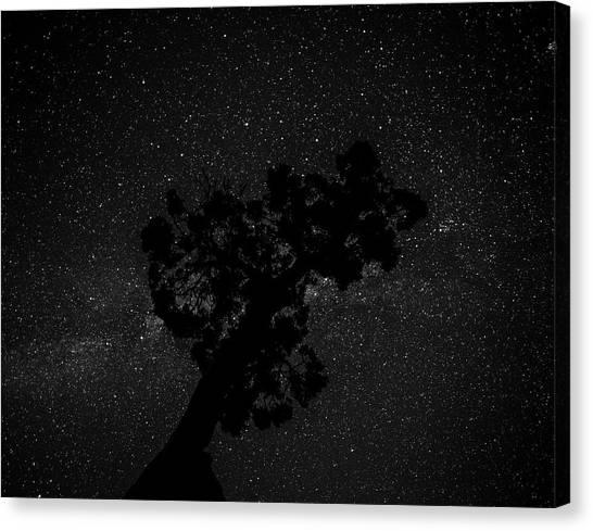 Empty Night Tree Canvas Print