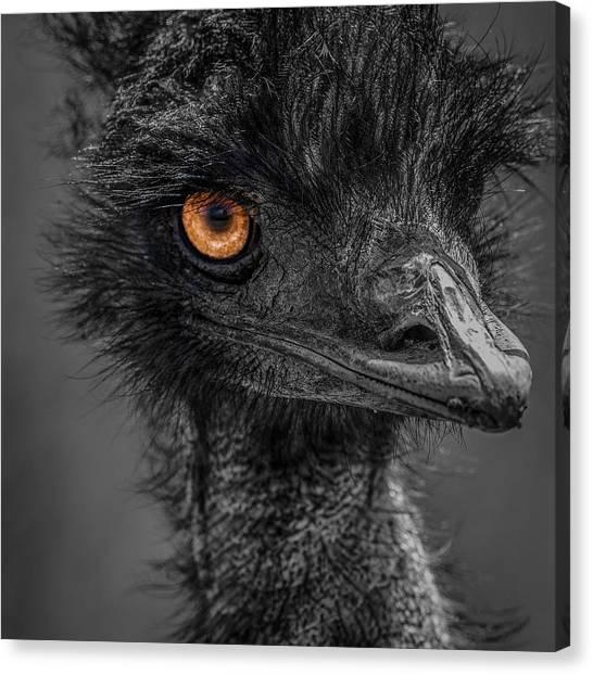 Emus Canvas Print - Emu by Paul Freidlund