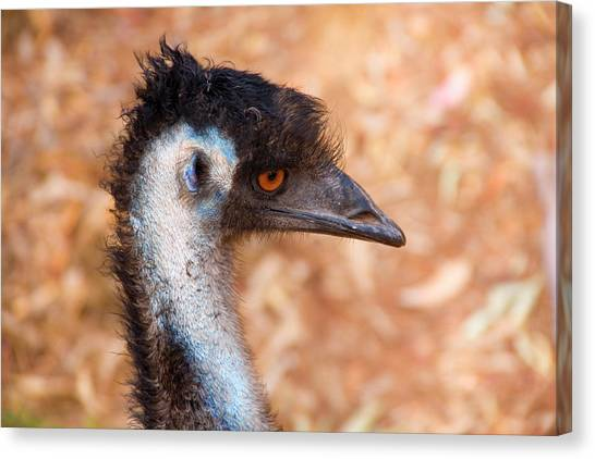 Emus Canvas Print - Emu Profile by Mike  Dawson