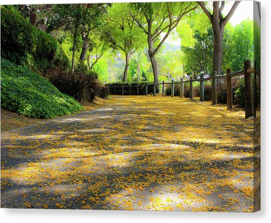 Canvas Print featuring the photograph Enchanted Path by Alison Frank