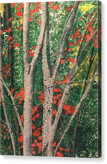 Enchanted Birches Canvas Print