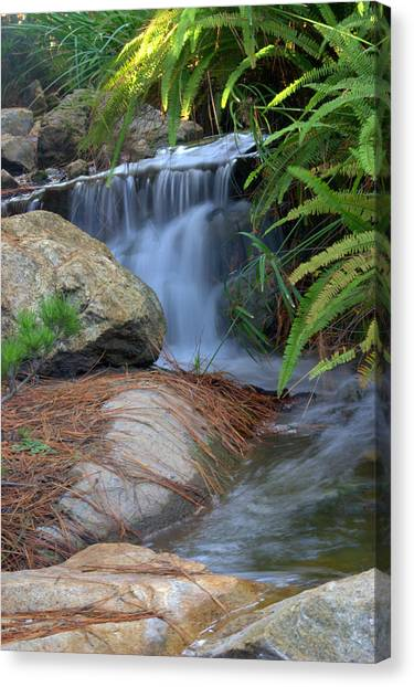 Enchanted Forest Canvas Print by Brad Scott