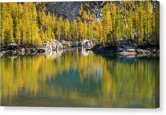Enchanted Larches Canvas Print