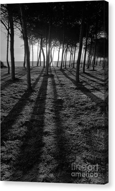Enchanted Sunset In Monochrome Canvas Print