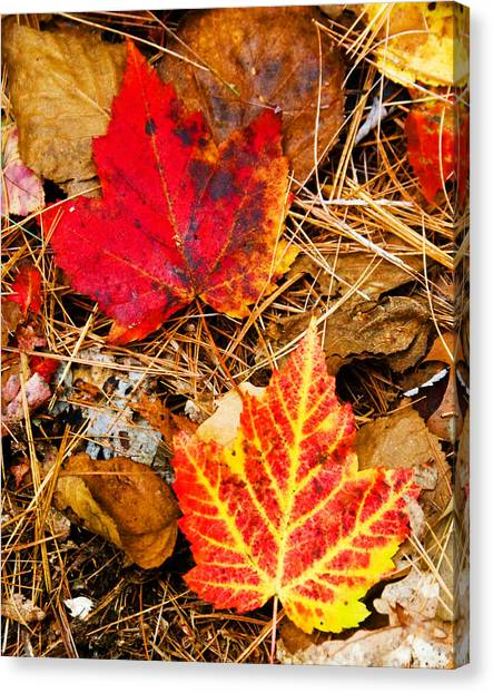 End Of Fall Canvas Print by Bob Bailey