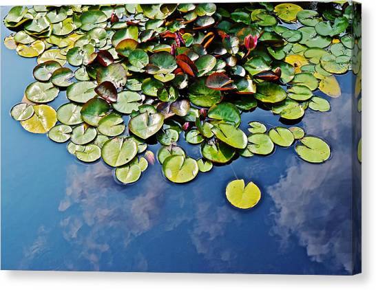 End Of July Water Lilies In The Clouds Canvas Print