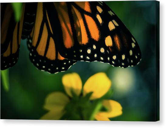 End Of Summer Monarch Canvas Print
