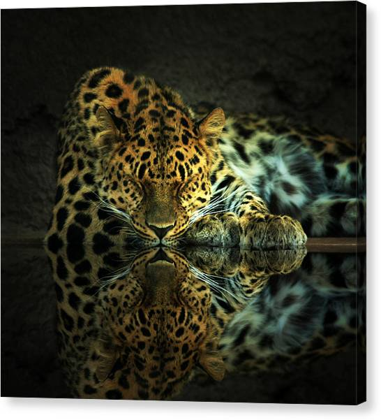 Endangered Canvas Print