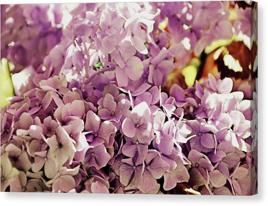 Endless Summer Color Canvas Print by JAMART Photography