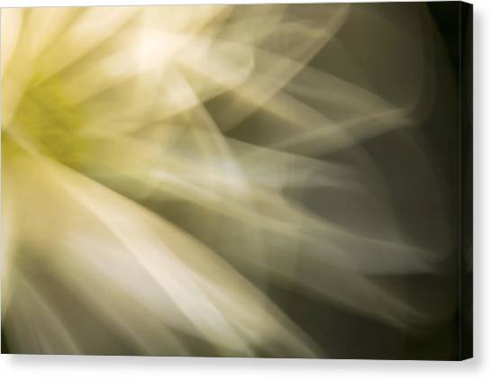 Energetic Coneflower  Canvas Print