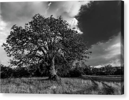 Engellman Oak Palomar Black And White Canvas Print