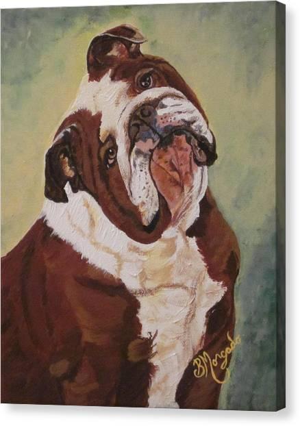 English Bull Dogs Canvas Print - English Bull Dog  by Brenda Morgado