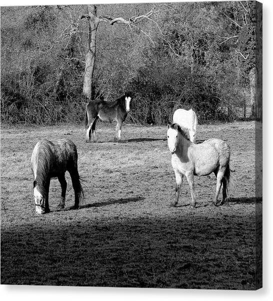 English Horses Canvas Print
